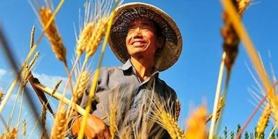 为什么大部分农民不愿意买农业保险?