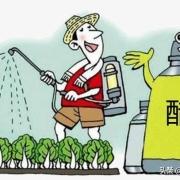 有些农民打农药的时候,往往在药桶里面加一点醋,加醋有什么用呢?