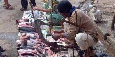 印度人杀鱼为什么不是刀切鱼,而是鱼撞刀?这背后究竟有何讲究?
