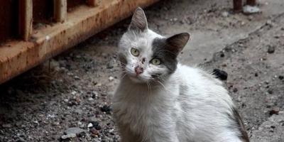 你会经常喂流浪猫吗?