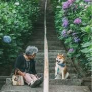 72岁男性,老伴在一个多月前去世,想再找一个老伴,应该怎么办?
