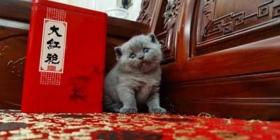 幼猫多大的时候适合被领养?