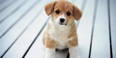 狗狗可以对主人忠诚到什么地步?
