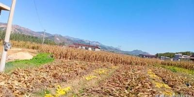 基本农田保护的粮食安全与农民社保是否可以联系起来?