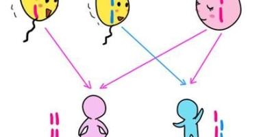 女性第一胎女孩的几率有多大?为什么?