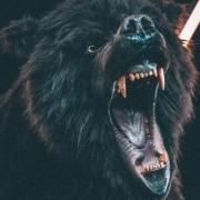 人和熊打谁能赢?