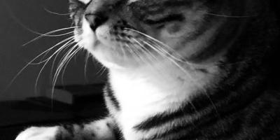 给猫咪取名字有用吗?