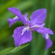 作为一个摄影爱好者,你拍过哪些紫色的花卉?可以讲讲心得吗?
