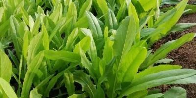 自己种的小青菜,刚长出来上面都是虫卵,为什么?是种子问题吗?