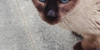 五个月大的猫咪适合领养吗?