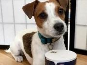 狗狗吃咸和油腻的东西,有哪些坏处?