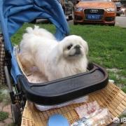 太原一小区规定养狗要交5万元保证金,引发争议,你怎么看?
