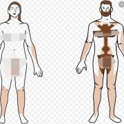 根据自然选择的法则,人的全身毛发应该保留,为什么进化掉了?