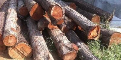 香椿树直径有40厘米,可以用来做家具吗?做家具的效果怎么样?