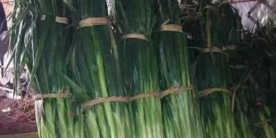 大白菜每斤1.9元,大葱每斤8.6元,算是哄抬物价吗?