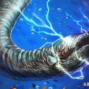 电鳗、电鳐会放出几百伏的电,除了人还有什么动物能制服它们?