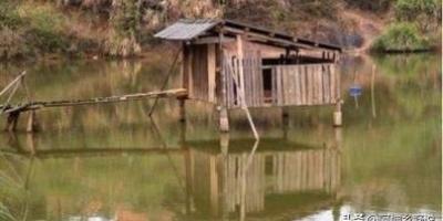 水上面建鸡场,上面养鸡,下面养鱼,这样的养殖基地可行吗?