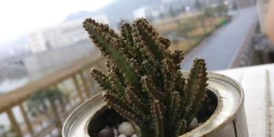 你知道有哪些养不死的盆栽吗?