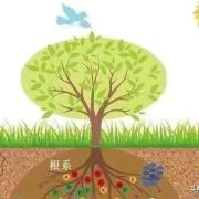 如何让作物根系爆发生长,生根壮根、保果壮果、提升产量?