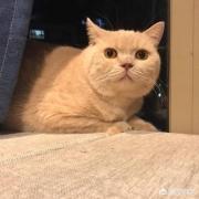 夜里叫的猫是公猫还是母猫?为什么惨叫?