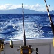 放生大海的鱼,为什么要在鱼肚子上捅一个洞?