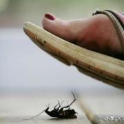 为什么蟑螂不能踩死?