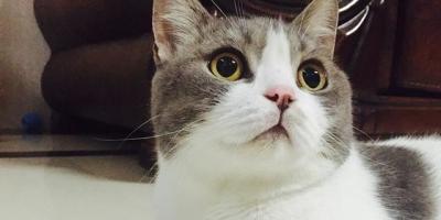猫咪会认识离开它很久的主人吗?