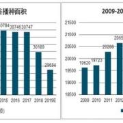 外国水稻亩产多少斤?