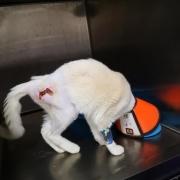 小区总是有人喂流浪猫,不让喂就说歹毒,没同情心,该怎么办?
