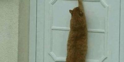 成年猫的智商相当于人的几岁?