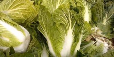 如何识别出甲醛白菜?