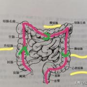 肠息肉长在哪段最危险,为什么?