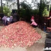 有些南方果农把卖不掉水果倒掉,为什么不通过电商卖到全国呢?