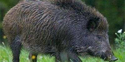 野生动物糟蹋农作物,是该保护农民利益还是该保护野生动物?
