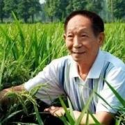 袁隆平为什么不是中国科学院院士?