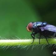 农村院子里苍蝇很多,怎么长期驱逐?或者消灭?