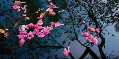 """诗词摄影:""""门外无人问落花,绿阴冉冉遍天涯。""""的意境如何拍摄?"""