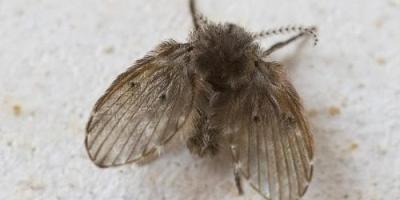 卫生间潮湿会有很多小飞虫,大家有什么妙招可以解决呢?