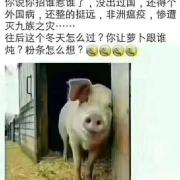 猪肉逐渐下跌,是怎么回事?