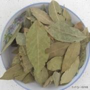 香叶是什么树的叶子?香叶树在陕西,河南能栽种吗?