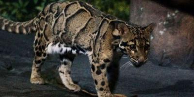为何近期频繁发现已经灭绝动物的出现?