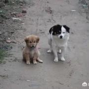 为什么农村人现在不愿意养狗,是什么原因造成的?