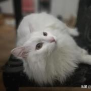 你洗澡时猫咪老是蹲在门口吗,它是守护你么?