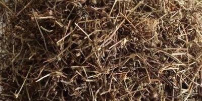 白花蛇草水含有什么成分?