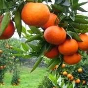 想租个水果摊再买辆6.8米高栏从南方拉水果回来批发,咋样?