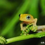 蛇隔空吸青蛙等小动物的原理是什么?