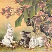 中国十二生肖有兔,月宫有兔;西方复活节的标志也是兔。为什么东西方文化都看重兔子?