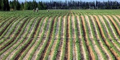 户口在安徽蒙城县城,想迁往新疆去种地,有什么优惠政策吗?