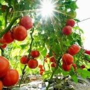 农村的土地以后以什么样的承包方式更有利于提高农民收入?