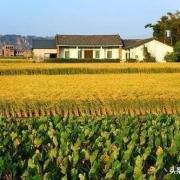 现在国家实施乡村振兴,您会怎么样把城市资本引进农村?